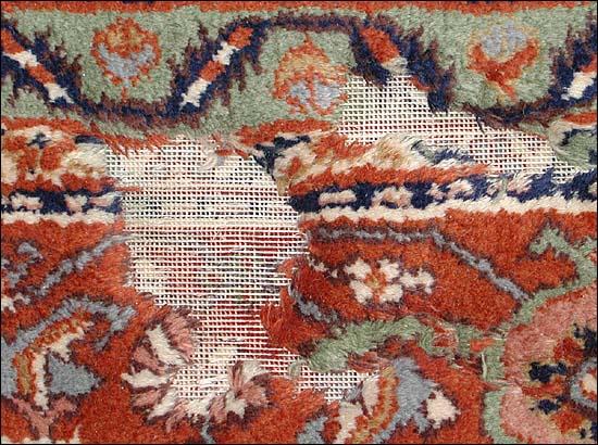 conservare tappeto tarme
